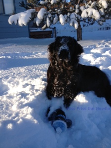 Miss Priss Enjoying the Snow